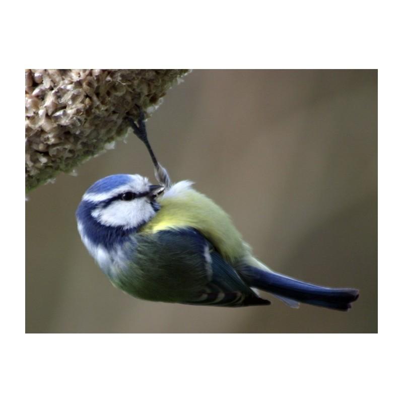 Graines pour oiseaux mon p 39 tit coeur - Graines de tournesol pour oiseaux ...