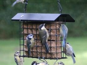 Mangeoire oiseaux pour graisses oisillon - Support boule de graisse pour oiseaux ...