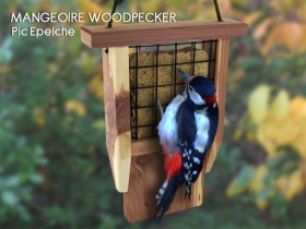 Mangeoire Woodpecker