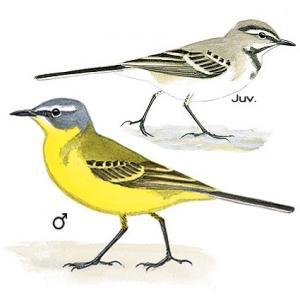 Apprendre reconnaitre les oiseaux les astuces pour for Les oiseaux du sud de la france
