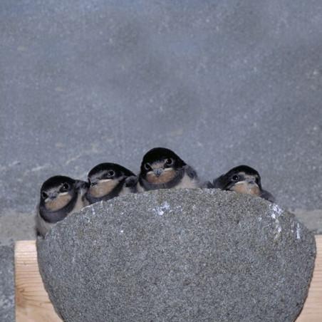 Nichoir Méridia pour hirondelles rustique Natures Market