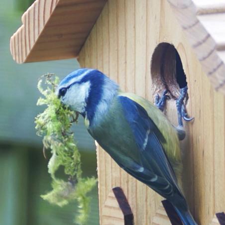 Nichoir La Crèche pour mésanges bleues, nonettes, huppées et mésanges noires. Fabriqué en France Natures Market Oisillon.net