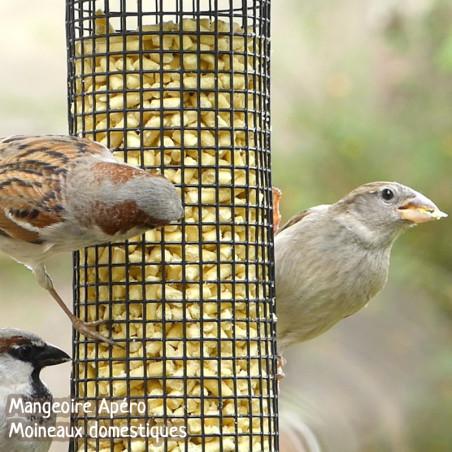 Nuggets pour oiseaux graisse végétale sans huile de palme Natures Market -Oisillon.net-