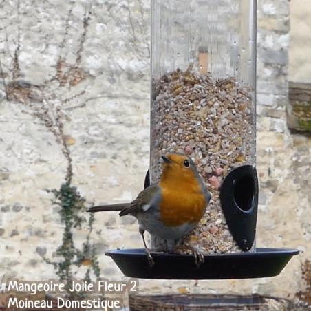 mélange graines supreme Natures Market-oisillon-net-nourriture-oiseaux-rouge-gorge-insectes