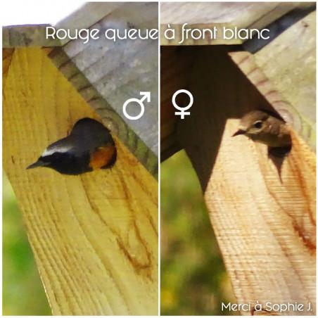 Nichoir La Chaumière pour oiseaux mésanges charbonnières, moineaux, sittelles torchepot ... Natures Market
