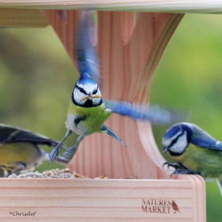Mélange FRUITS ET INSECTES Nature Market Insectes pour oiseaux