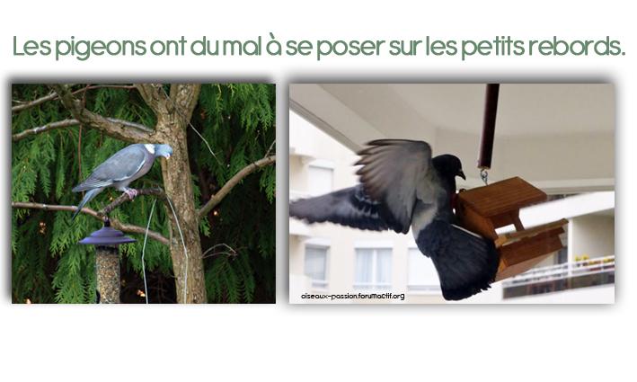 Je Ne Veux Pas De Pies Pas De Pigeons Pas De Perruches Et Pas D Etourneaux Oisillon
