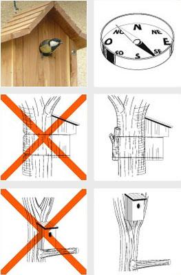 Comment installer un nichoir oisillon - Comment nourrir un oisillon ...