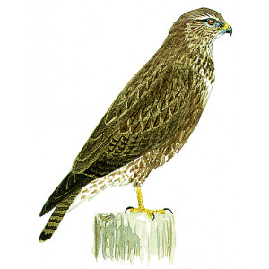 Picture of Buse variable