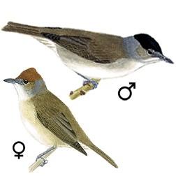 Apprendre A Reconnaitre Les Oiseaux Les Astuces Pour Reconnaitre Les Oiseaux Oisillon